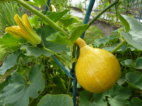 Fancy a winter squash?