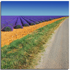 Convergenze provenzali (Nespyxel) Tags: france field lines rural landscape colours lavender diagonal campo convergence provence fra