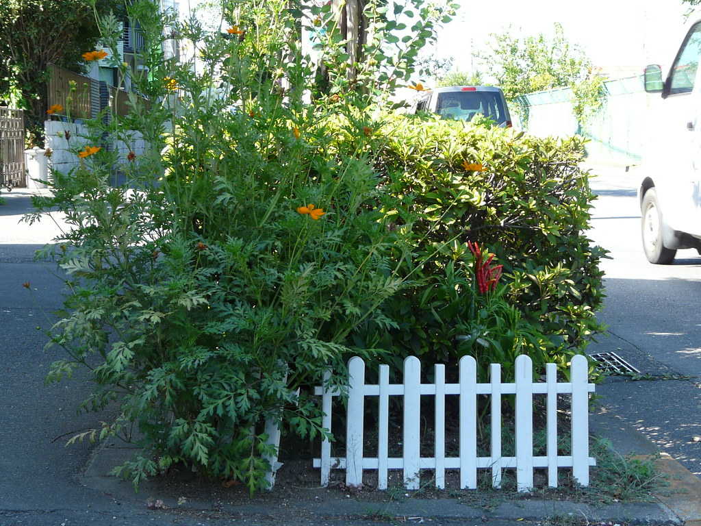 Curbside Chili Garden