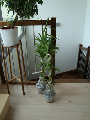 bambou 001