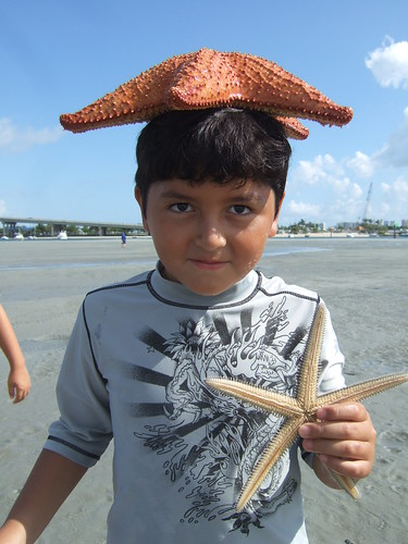 Lorenzo and a pair of starfish