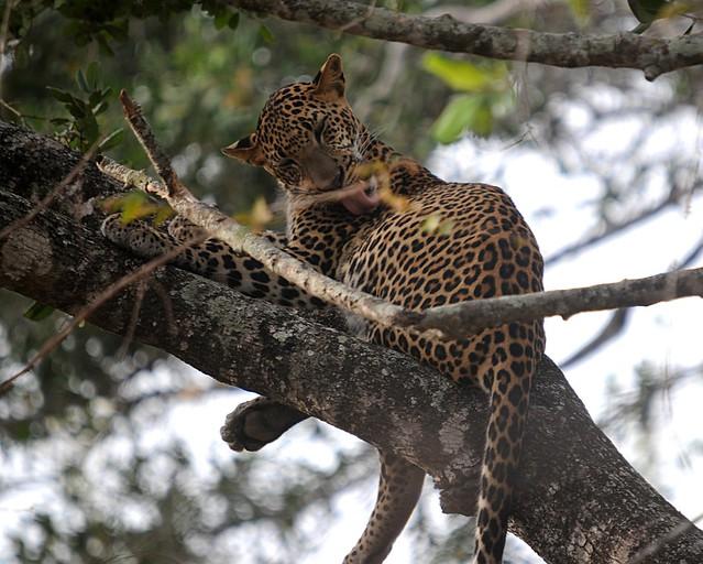 leopard2A