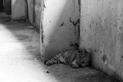 IMG_0482 (翔志) Tags: taiwan taipei 台灣 台北 貓 taipeicounty 台北縣 侯硐 houtong 猴硐 瑞芳鎮 貓村 catvillage rueifangtownship houtongcatstreet 百貓街