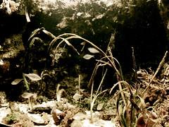 Dead water (benleto) Tags: ocean california old sea summer usa fish nature water june america aquarium bay coast monterey unitedstates pacific decay sealife rotten pacificcoast stagnant mouldy