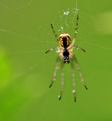 spider (Paul Mallett) Tags: spider nikkor105mmf28gvrmicro