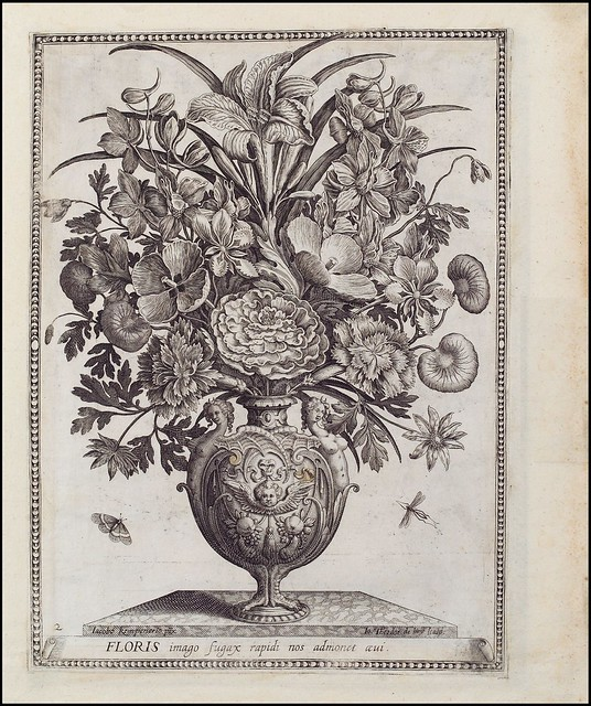 Floris imago fugax rapidi nos admonit aevi (de Bry) - Herzog