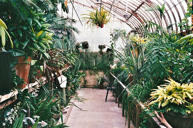 beautiful greenhouse