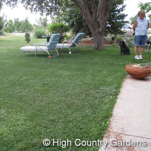 HCG lawn