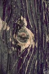 nodo (Marianna Milione) Tags: door wood color verde green texture pattern colore purple knot ribs porta grooves veins viola legno vene nodo venature striature incavi