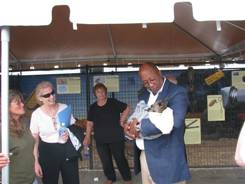 Ambassador Ron Kirk holds a baby Kangaroo during his tour of the Bangor State Fair with UDSA Rural Development State Director for Maine Virginia Manuel.