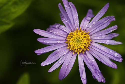 Aster 223/365