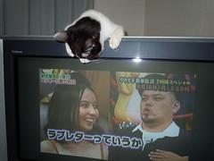 8月11日 ジィ、TVの上でJie On the TV
