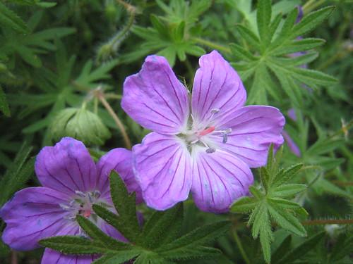 Flowers (663)