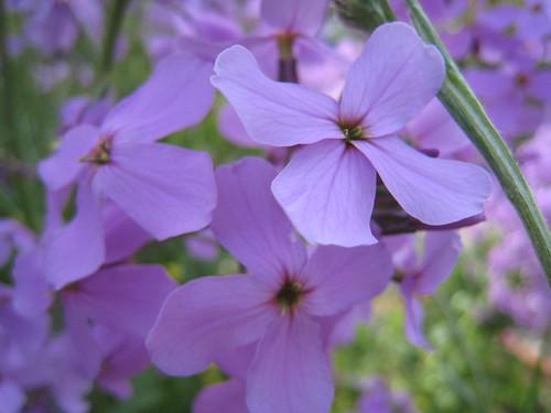 Flowers (887)