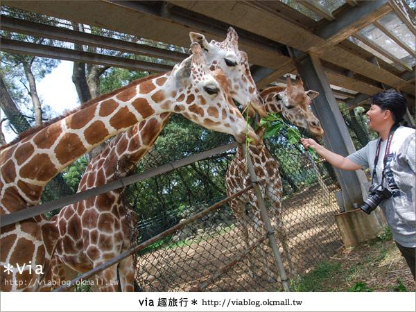【關西六福莊】精彩秘探野生動物園/DIY手作/農趣樂~!38
