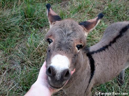 Baby Donkey 9