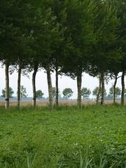 Zoutkamperweg (Michiel Thomas) Tags: holland netherlands groningen province zoutkamp provincie ergaatnietsbovengroningen  zoutkamperweg