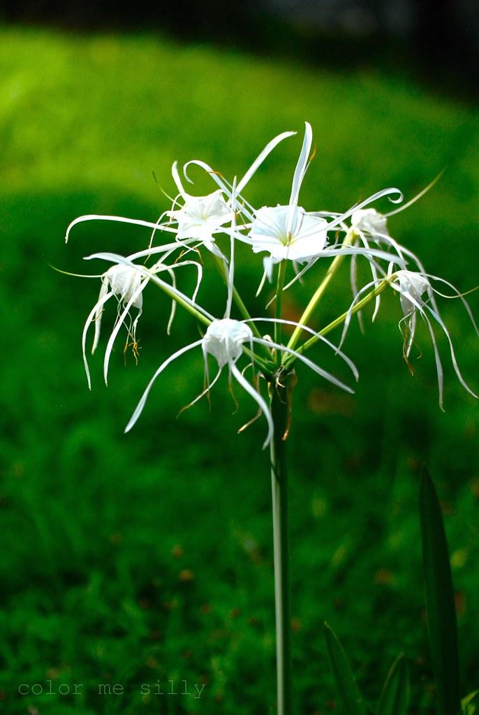 strange white flower
