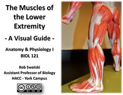 Title Page - Muscles of the Lower Extremity Anatomy Visual Atlas, page 1 (Rob Swatski) Tags: york podcast college skeleton foot photo movement model education lab toe exercise body pennsylvania muscle muscular leg review commons science system tendon medical organ study human cover massage anatomy laboratory creativecommons learning atlas bone guide practice therapy lower title visual biology harrisburg skeletal wiki clinical physiology connective buttock kinesiology physicaltherapy hacc itunesu musculoskeletal swatski robswatski biogeekiwiki biol121
