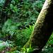 Trees Palms Ferns Moss Lichens Sunlight Devil's Millhopper