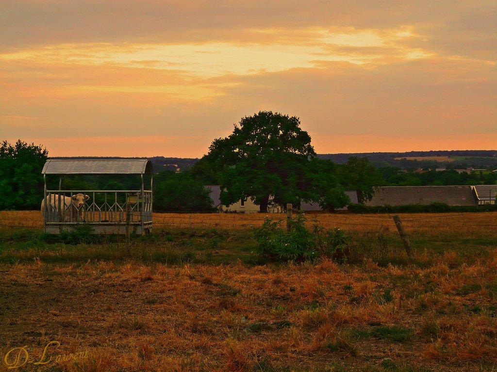 Un soir en campagne ! Ste Suzanne - Mayenne - Pays de Loire - France .