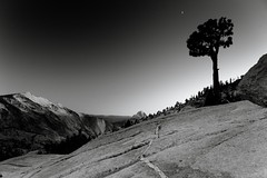 Granite.Moon.Tree (Bad, Bad Lechroy Brown) Tags: park sunset bw moon clouds point landscape national yosemite granite rest tuolumne olmsted