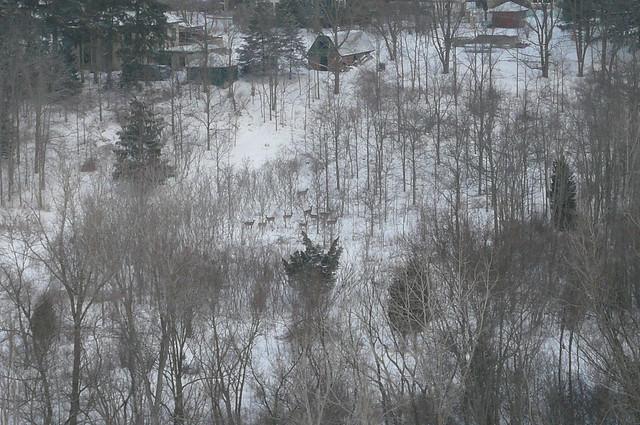 Deer Near