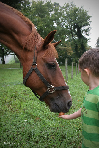 Brady feeds a crab apple to one of the horses