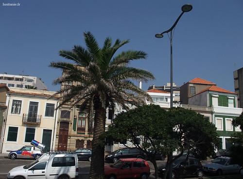Grande palmeira na rua