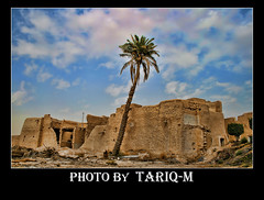 Palm Tree HDR (TARIQ-M) Tags: sky cloud tree heritage palmtree riyadh saudiarabia hdr canonefs1855 naturepeople topshots canon400d photosandcalendar worldwidelandscapes panoramafotogrfico olddirriyah theoriginalgoldseal flickrsportal