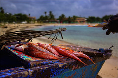 neros (Seracat) Tags: fish beach canon fisherman dominicanrepublic playa caribbean pescado carib poisson nero pescador platja santodomingo grouper caribe mero peix repblicadominicana juandolio sanpedrodemacoris duskygrouper seracat