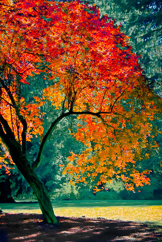 [フリー画像] 自然・風景, 樹木, 紅葉, 201008221700