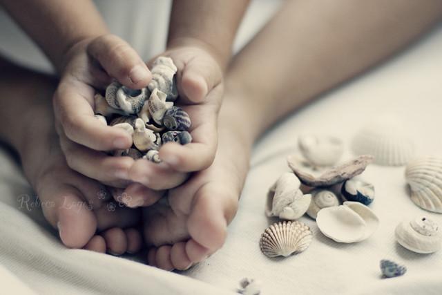 Shells (231/365)