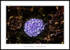 Sóla en la oscuridad (Jose Luis Mieza Photography) Tags: flowers flores flower fleur fleurs flor benquerencia florews reinante jlmieza reinanteelpintordefuego joseluismieza
