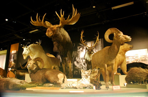 Taxidermy display, Royal BC Museum, Victoria, BC, Canada