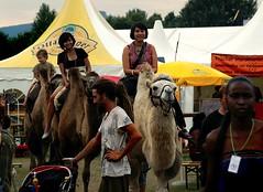 Afrika Tage Wien, Donauinsel (Foto-X) Tags: wien austria sterreich europa f3 donauinsel farbfoto karavanserei kamelreiten wstenschiffe afrikatagewien