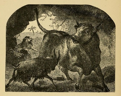 Taurus Leonem Fugiens et Hircus