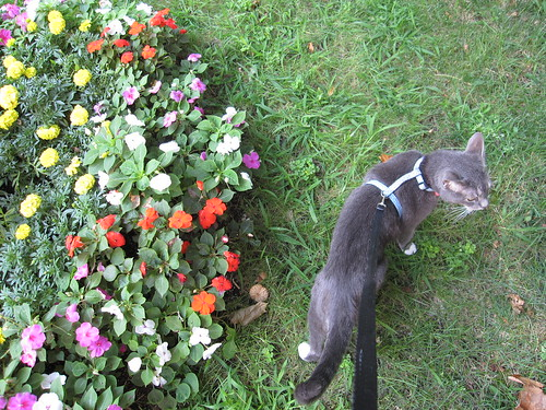 izzy and the flowers