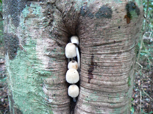 Fungi in tree cleft