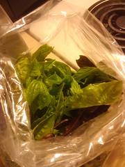 Sweet basil, green and purple