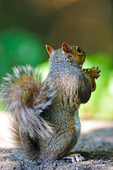 Let Us Pray (Brian E Kushner) Tags: animals newjersey backyard nikon squirrel wildlife brian nj f4 audubon graysquirrel kushner 600mm nikor backyardanimals d3s afsnikkor600mmf4gedvr audubonnj bkushner brianekushner nikond3s nikon600mmf4afsvr