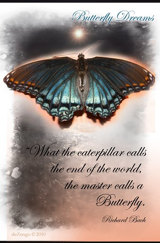The Butterfly Dream : with caption