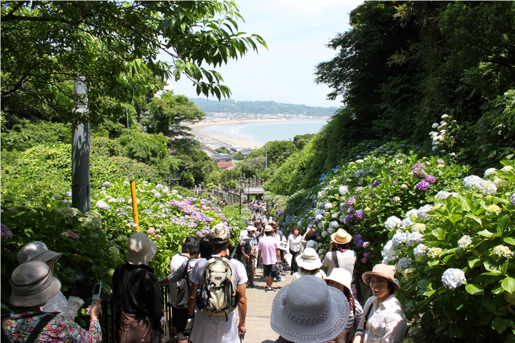 Hydrangeas - Exploring Hase, Kamakura (4)