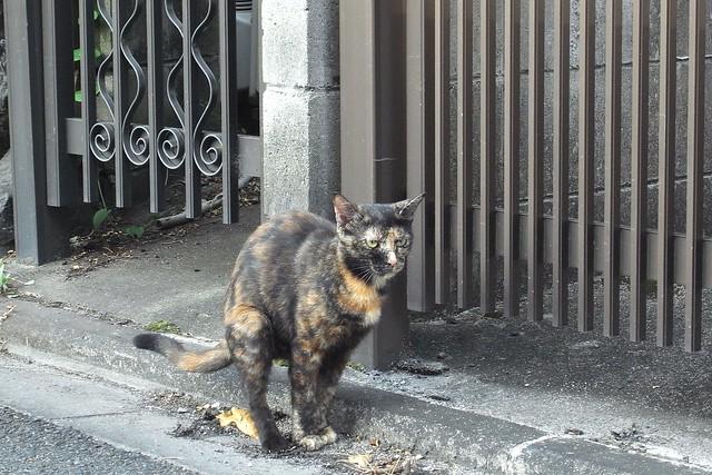 Today's Cat@2010-09-02
