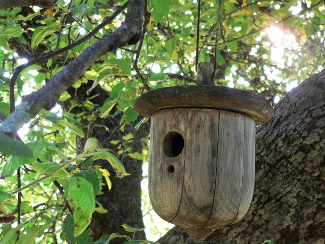 acorn_feeder