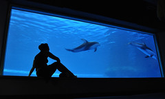 """""""The happiness of the dolphin is to exist. For man it is to know that and to wonder at it."""" Jacques Yves Cousteau (Canuckish) Tags: blue chicago water silhouette dolphin perspective dolphins ripples framing sheddaquarium megandooley"""