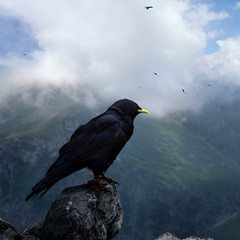 A sentinel Alpine Chough on the lookout (Bn) Tags: lake germany bavaria berchtesgaden topf50 harrypotter topf300 kings fjord hikers crow paragliding thealps topf100 500faves blackbird bluelake topf200 paragliders dreamcatcher verticalpanorama kraai topf400 knigssee alpinechough corvidae topf500 yellowbilledchough 500x500 pyrrhocorax stbartholom topf700 100faves 50faves 200faves nationalparkberchtesgaden abigfave jennerbahn 300faves berchtesgadennationalpark crowfamily 400faves germanbavarianalps southofgermany 600faves alpenkauw 700faves stbatholom winner500 schnauamknigssee berchtesgadenalps cleanestlakeingermany stretchesabout77km formedbyglaciers nearborderwithaustria jennermountaintop1870m picturesquesetting sheerrockwalls playaflugelhorn hikingtrailsupthesurroundingmountains royalmountainexperience thebreathtakingalpinemountainsoftheknigssee
