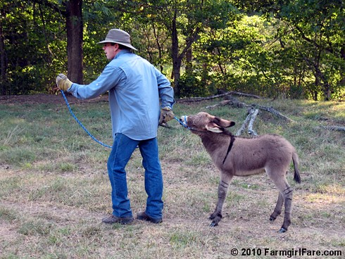 Donkey Training 2