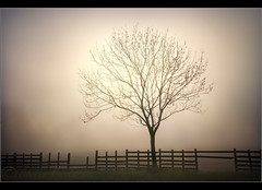 .... (Digital Diary........) Tags: mist tree fog fence atmosphere sthelens chrisconway hff mossbank fencefriday
