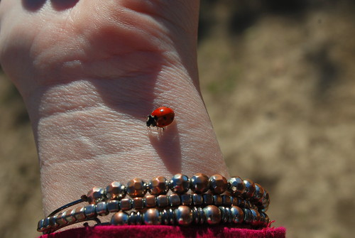lady bug luck
